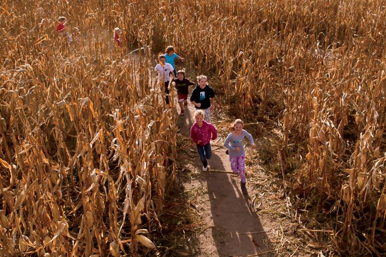 Guse Corn Maze, Wanatah, Indiana