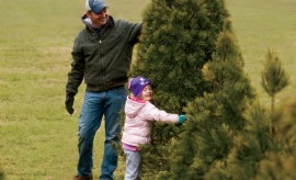Whitetail Tree Farm