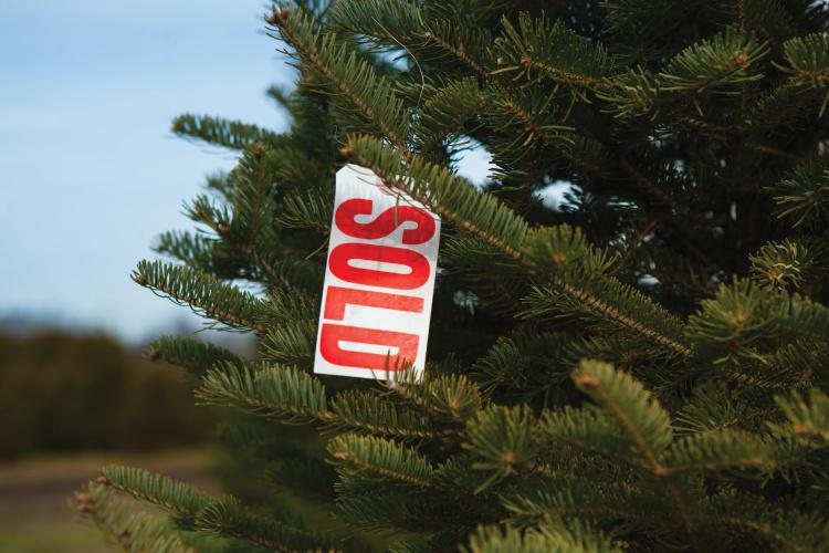 Whitetail Christmas Tree Farm