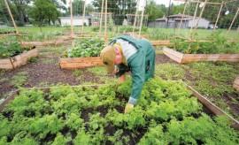 Portage Community Garden