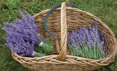Lavender Lane Farm