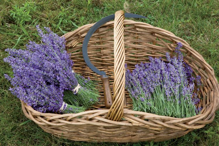 Lavender Lane Farm