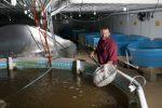 shrimp farmers