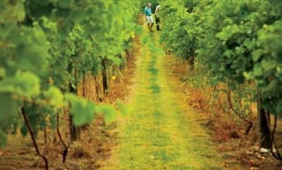 Satek Winery in Fremont, Indiana