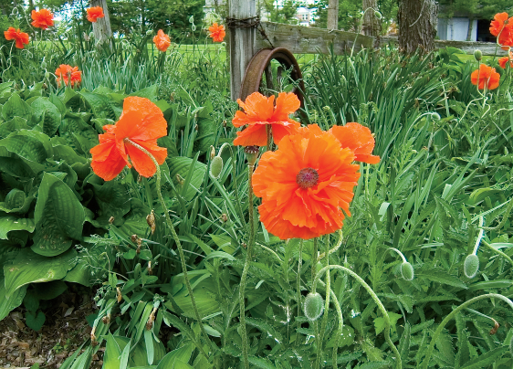 Perfect Perennial Plants For Spring