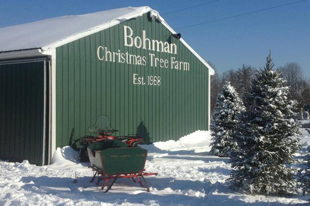 Bohman Christmas Tree Farm