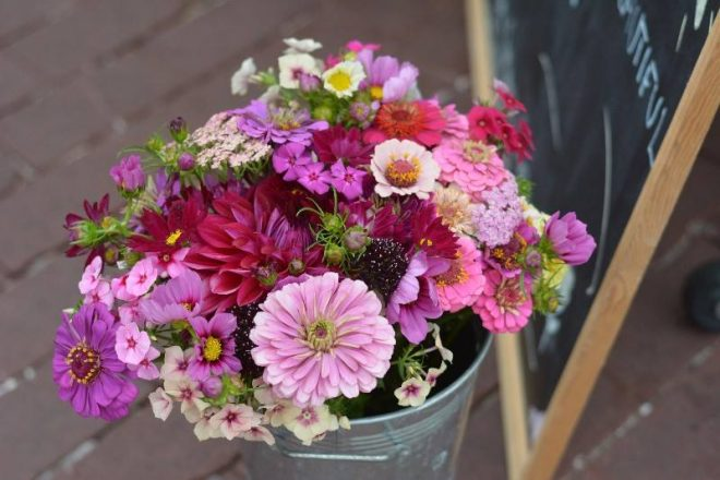 Devils Ridge Flower Farm
