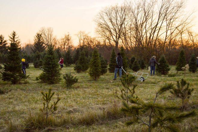 Brawner's Greenhouse and Christmas Tree Farm